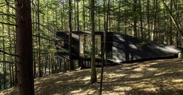 Estados Unidos: Casa entre medio de árboles - Jacobschang Architecture